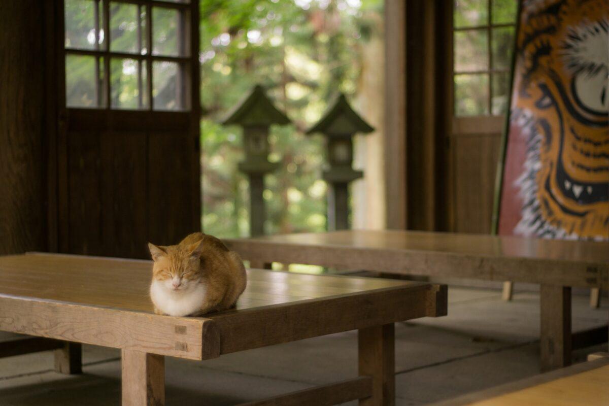 【ねこ寺】猫に縁を持つ寺院5選!猫が多いだけじゃない?
