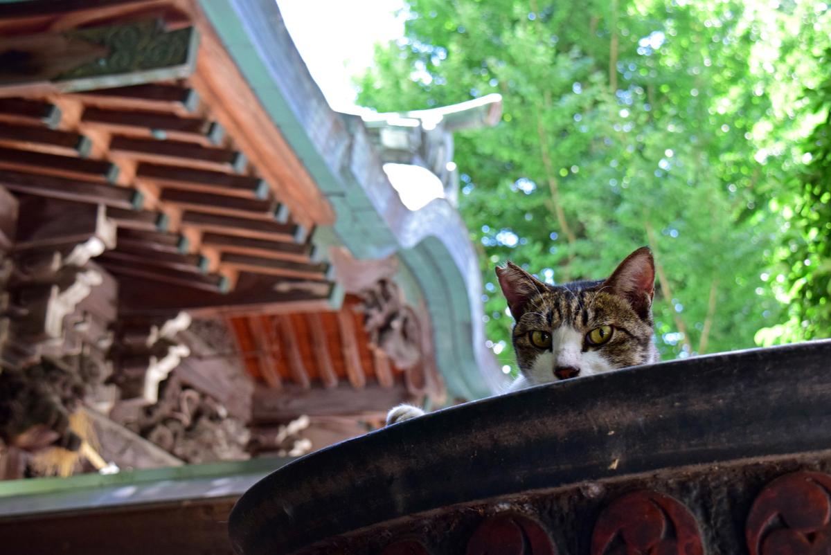 【ねこ神社】猫にまつわる国内の神社5選