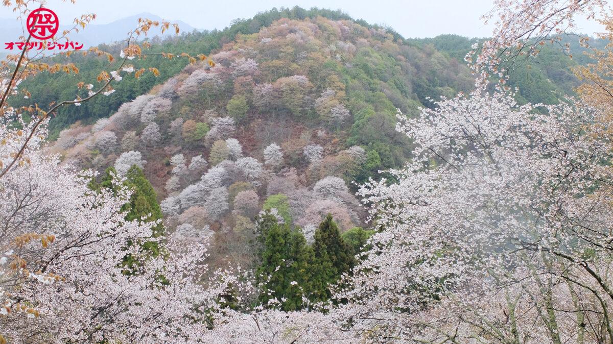 千本桜「奈良 吉野山」で宿くらべ!御朱印・名所めぐりしてみた
