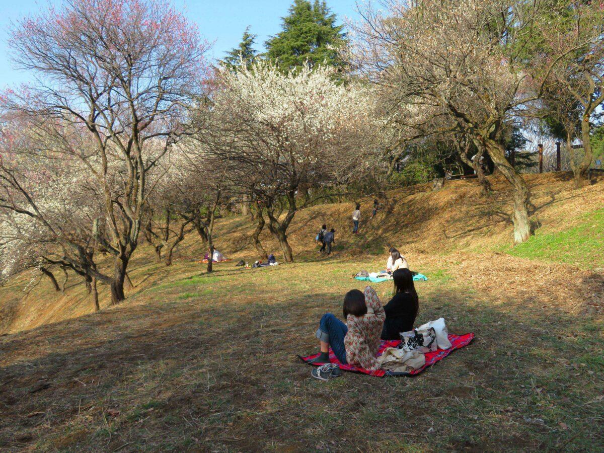 【こどもの国梅まつり】早春の装いで子ども達を温かく迎える梅の花