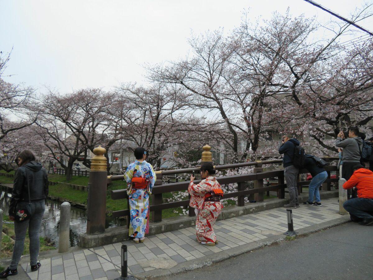 【川越新河岸川の桜】氷川橋で桜並木をバックに和服姿で思い出の記念撮影
