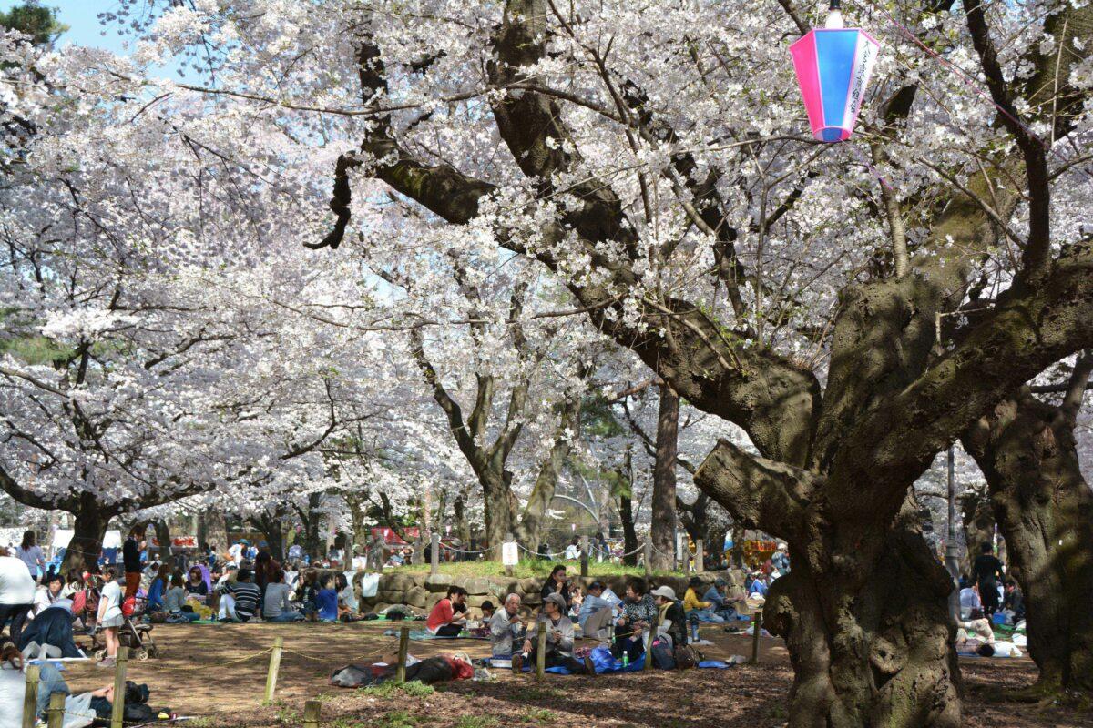 【大宮公園の桜】園内に露店がひしめき合う埼玉県内屈指の花見スポット