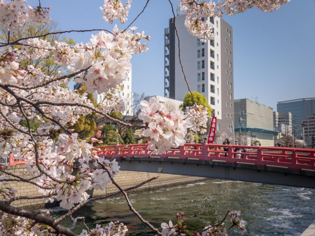 目黒川の桜(五反田駅〜旧東海道・品川橋)を巡るぶらり散歩