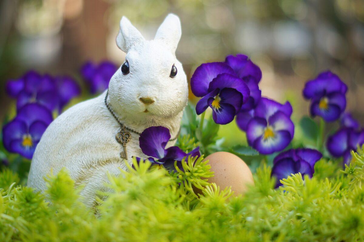 もうすぐイースター!うさぎとの関係や因幡の白兎を楽しめるお祭りを紹介!