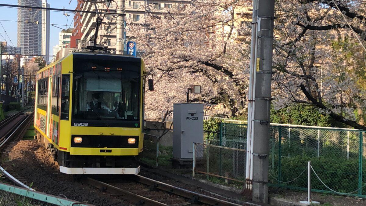 【東京さくらトラム】「学習院下」は都電×桜が同時に撮れる絶好のフォトスポット!