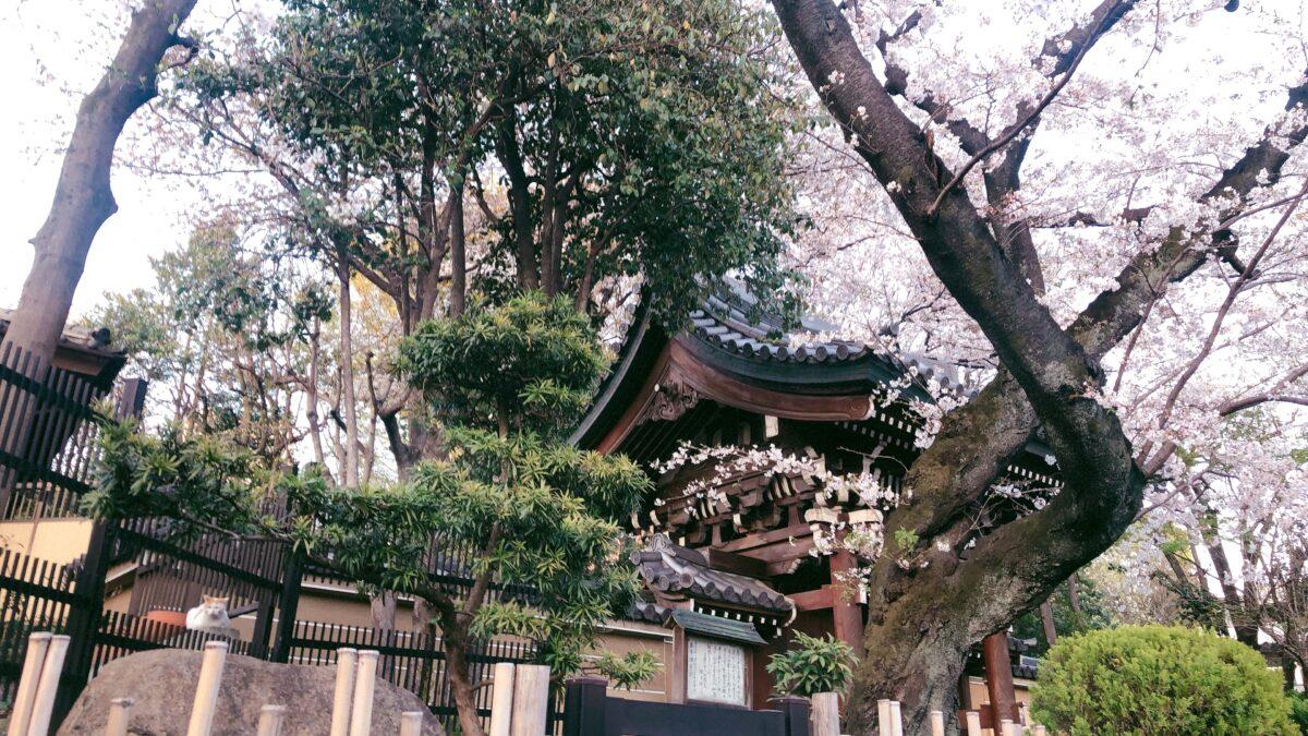 【東京さくらトラム】「鬼子母神前」法妙寺は猫好き必見の桜スポット!
