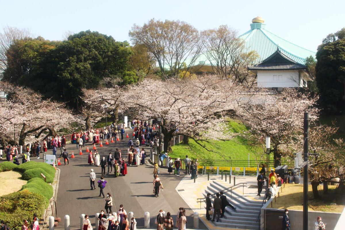 北の丸公園の桜が満開!武道館、田安門に映える桜を速報レポート