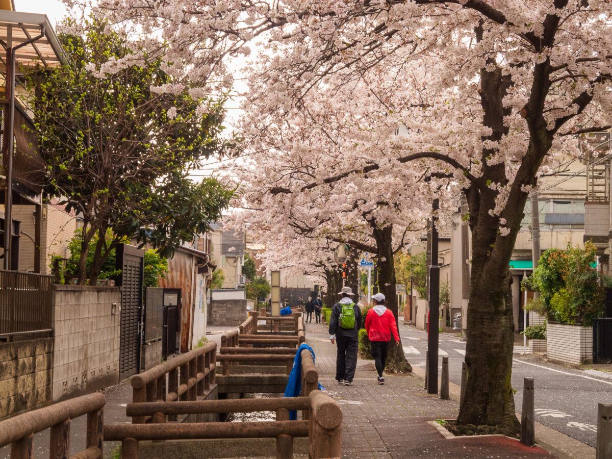 ぶらぶら歩きにも最適。「洗足流れ」〜「ねがた桜みち」住宅地に続く桜並木。