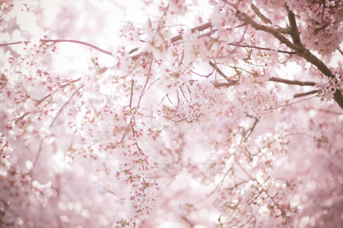 桜の御朱印をもらうならココ!春をもっと感じられる神社仏閣5選
