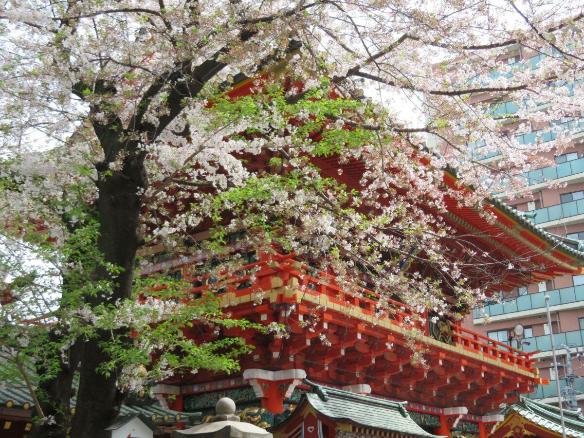 【神田神社の桜】時を超えた江戸っ子の気質に安らぎを届ける薄紅色の花