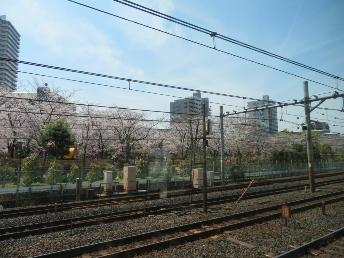 【京浜東北線で車窓花見】川口~西川口の区間で電車から眺める公園の桜並木