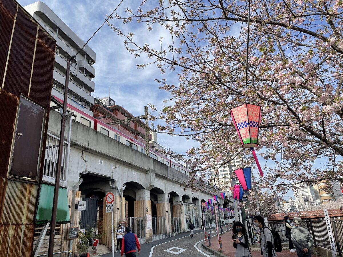 【京浜急行日ノ出町〜黄金町】車窓から見る大岡川沿いの桜並木