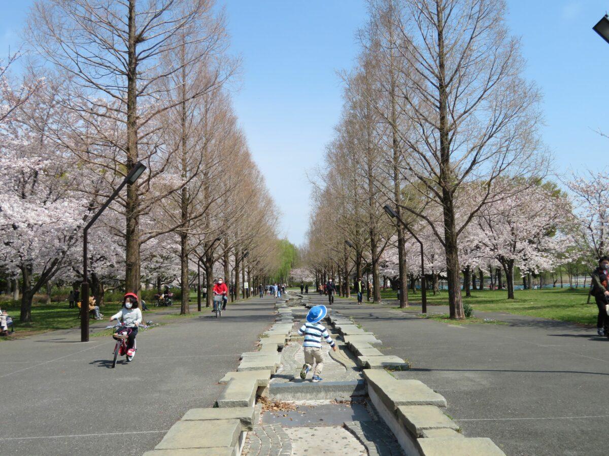 【舎人公園千本桜まつり】日暮里・舎人ライナーの開通を記念して初開催