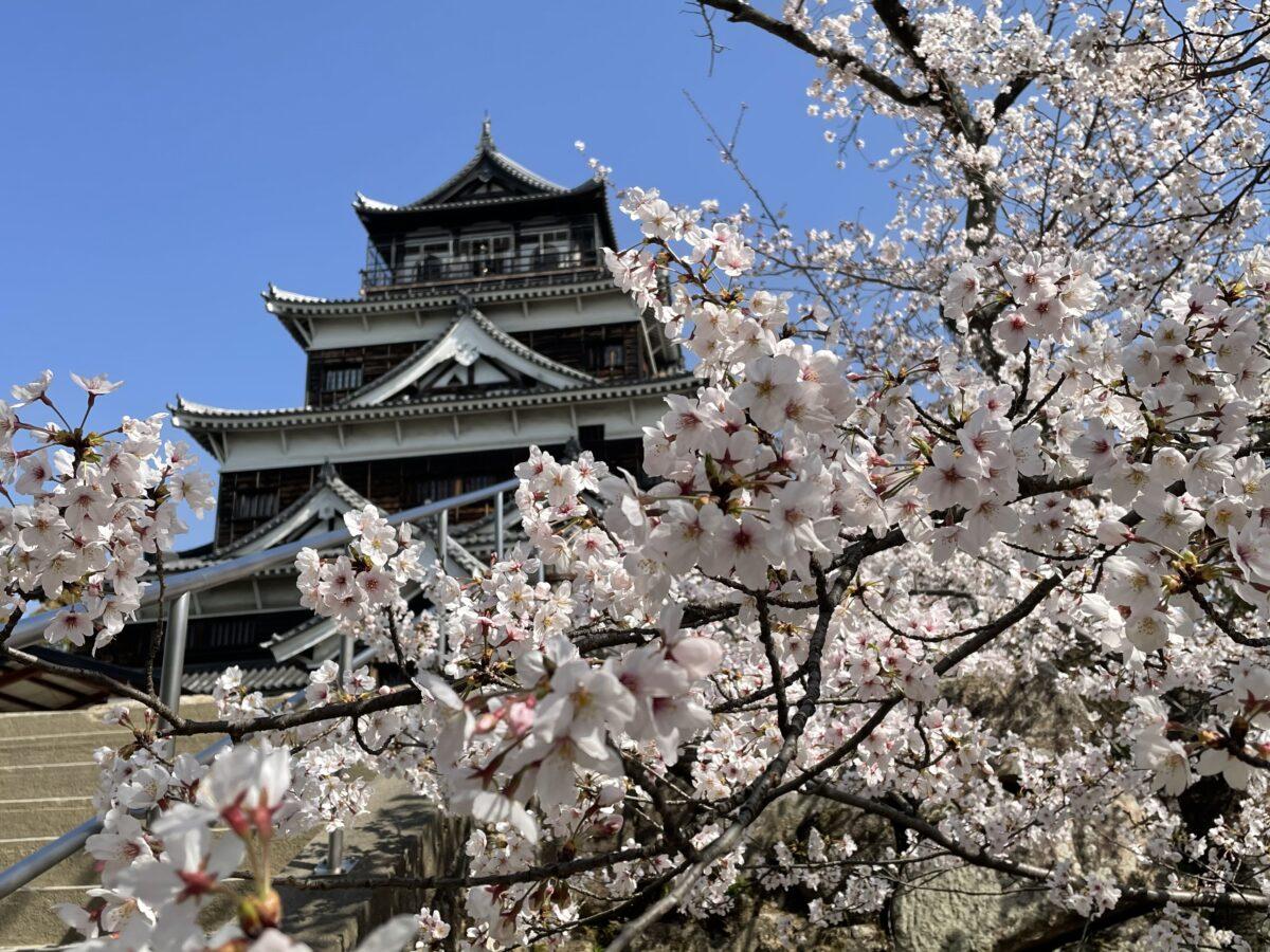 『広島城』と満開の桜の競演を現地からレポート〈2021〉