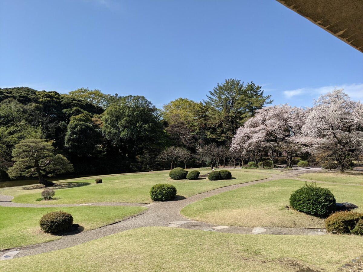 新宿御苑に咲く桜は◯◯種類!?季節限定スイーツも