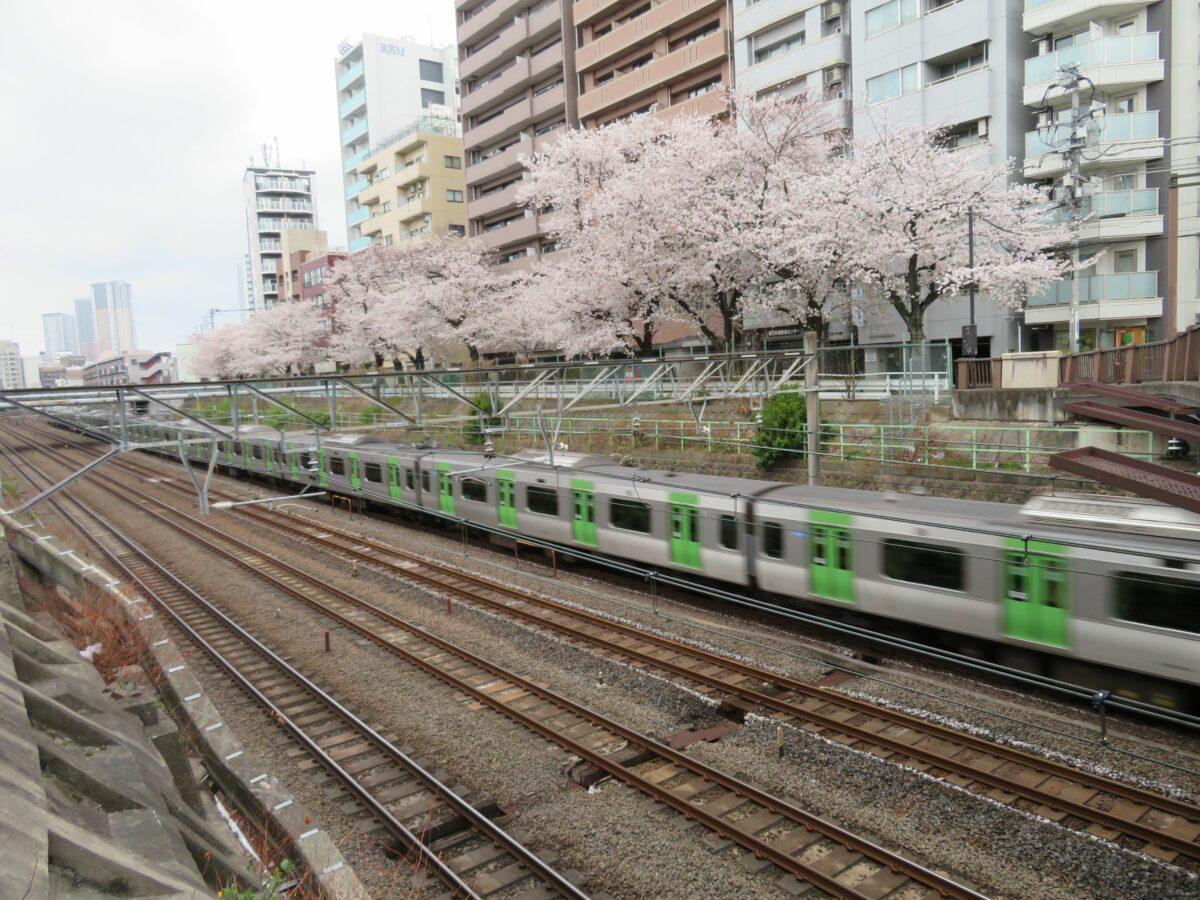 【山手線で車窓花見】巣鴨~大塚の区間で北側に繋がる「すがも桜並木通り」
