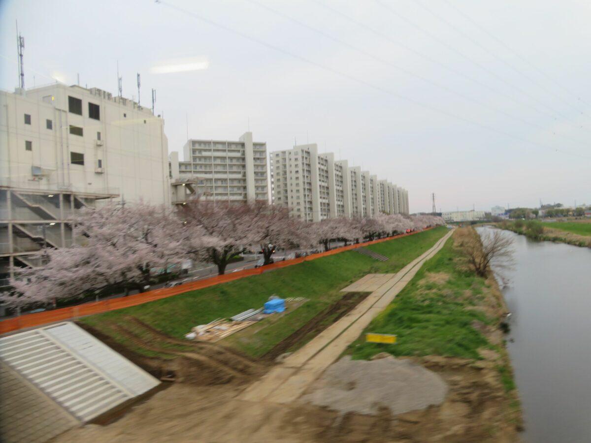 【東武東上線で車窓花見】柳瀬川~みずほ台の区間で両側に繋がる桜並木