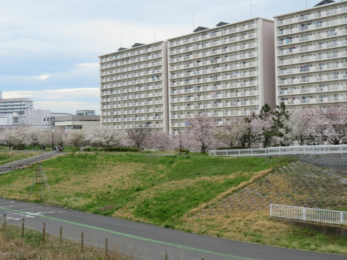 【小松川千本桜まつり】桜のラインとリングが楽しめる荒川沿いの公園
