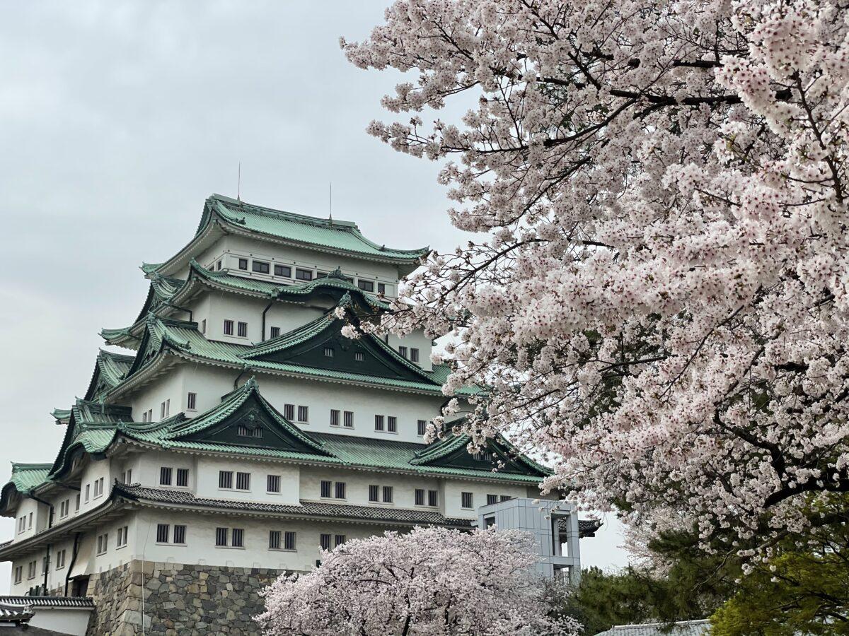 「名古屋城春まつり」現地レポート!16年ぶりにあのシンボルが地上に降臨