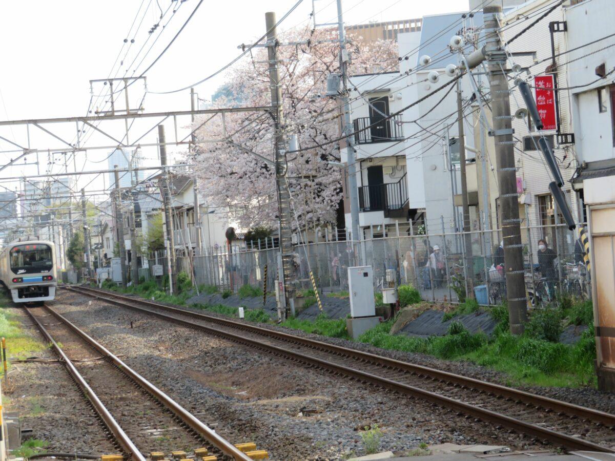 【埼京線で車窓花見】板橋~十条の区間で石神井川沿いや沿線に植栽される桜