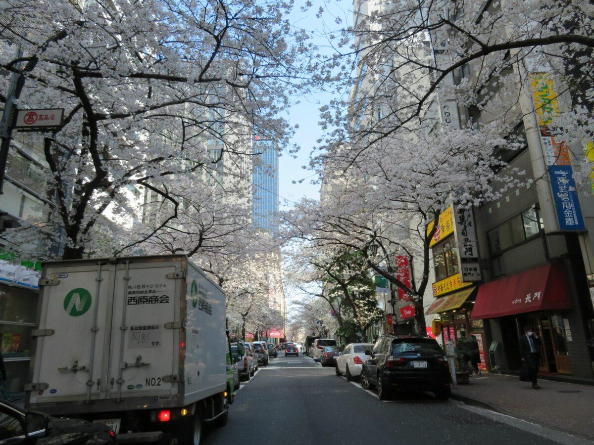 【八重洲さくら通りの桜】東京駅の北東から日本橋まで繋がる桜のトンネル