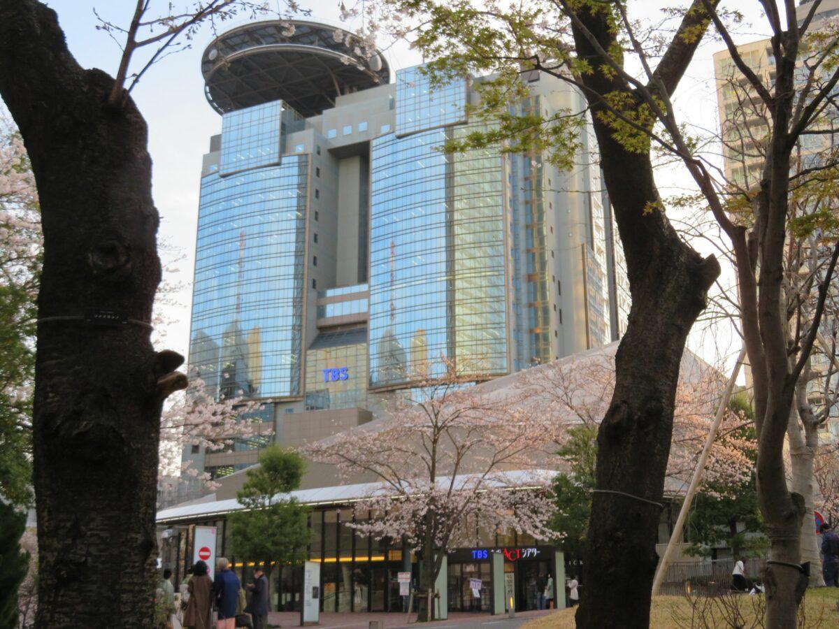 【赤坂サカスの桜】早春の彩りで包まれる東京都港区のTBS放送センター