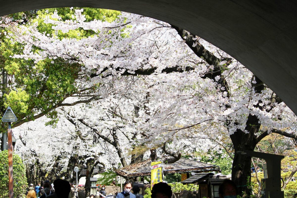 音無親水公園は北区の桜の名所!江戸時代から続く、風光明媚な観光地