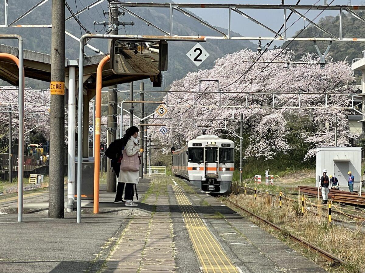【御殿場線山北駅】桜のトンネルを通過する御殿場線