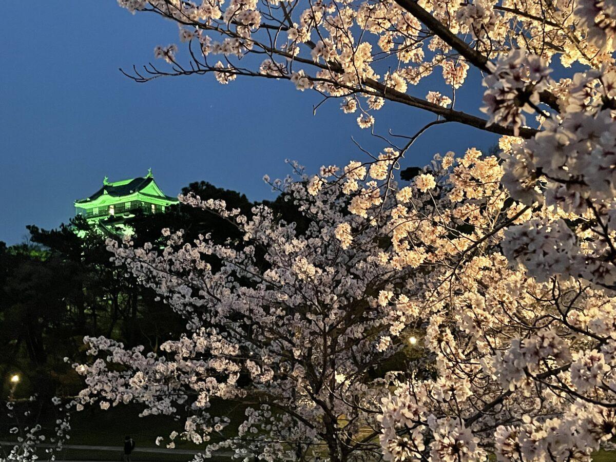 【愛知県岡崎市】岡崎の桜まつり!絶景の夜ざくら現地レポート!