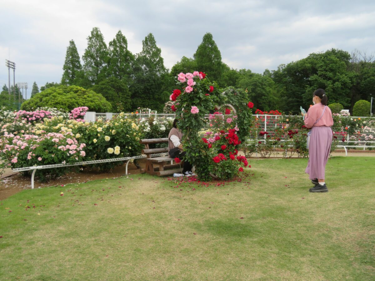 伊奈町バラまつり開催中!400種5000株を超えるバラが豊かに彩る花園