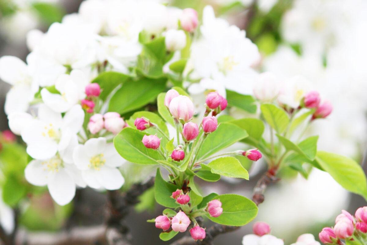 荒川自然公園をピンク、白の桜が飾る!アスレチックなど子供の遊び場も充実