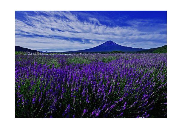 【富士河口湖ハーブランタンまつり】7月10日に開催!富士を背に咲くラベンダーと夜空に浮かぶランタンを楽しむ