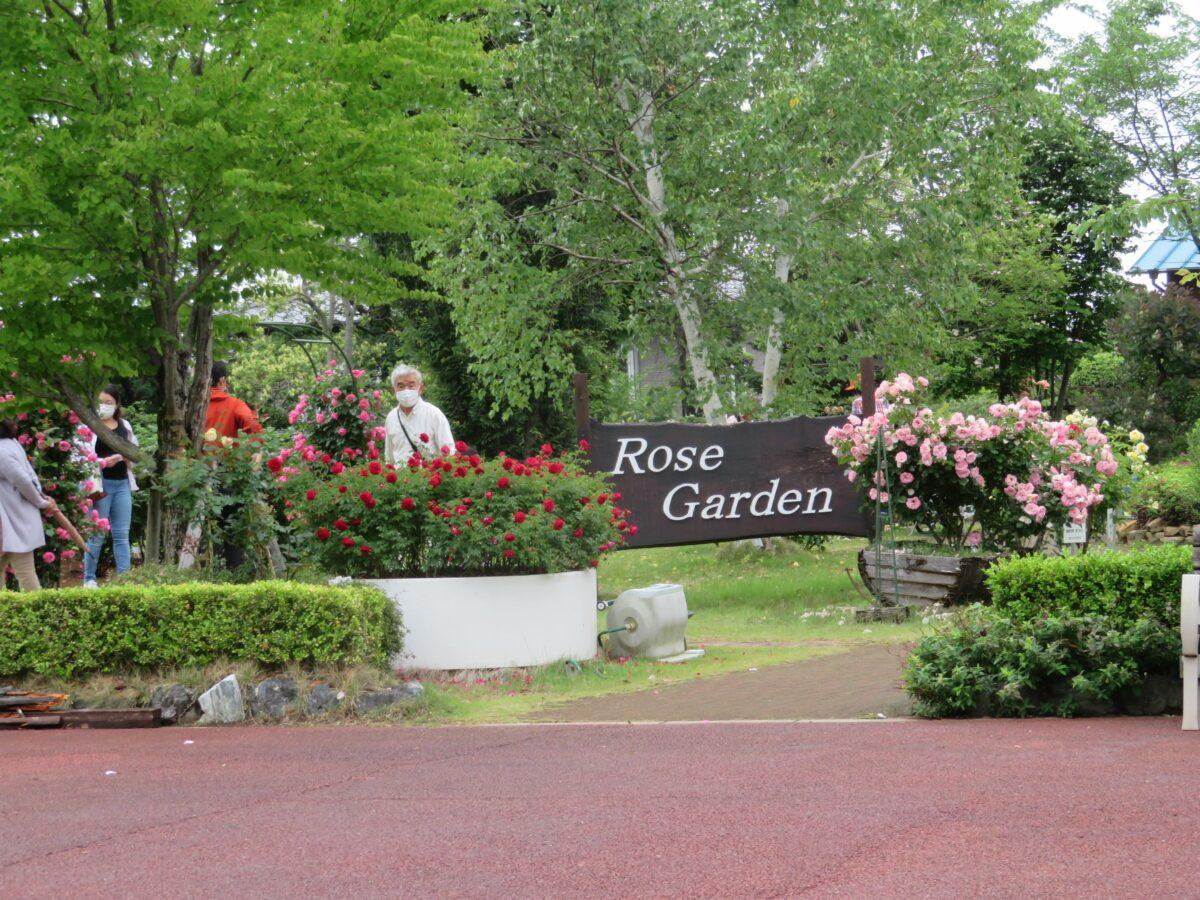 花久の里バラまつりでローズガーデンを彩る約200種類のバラ