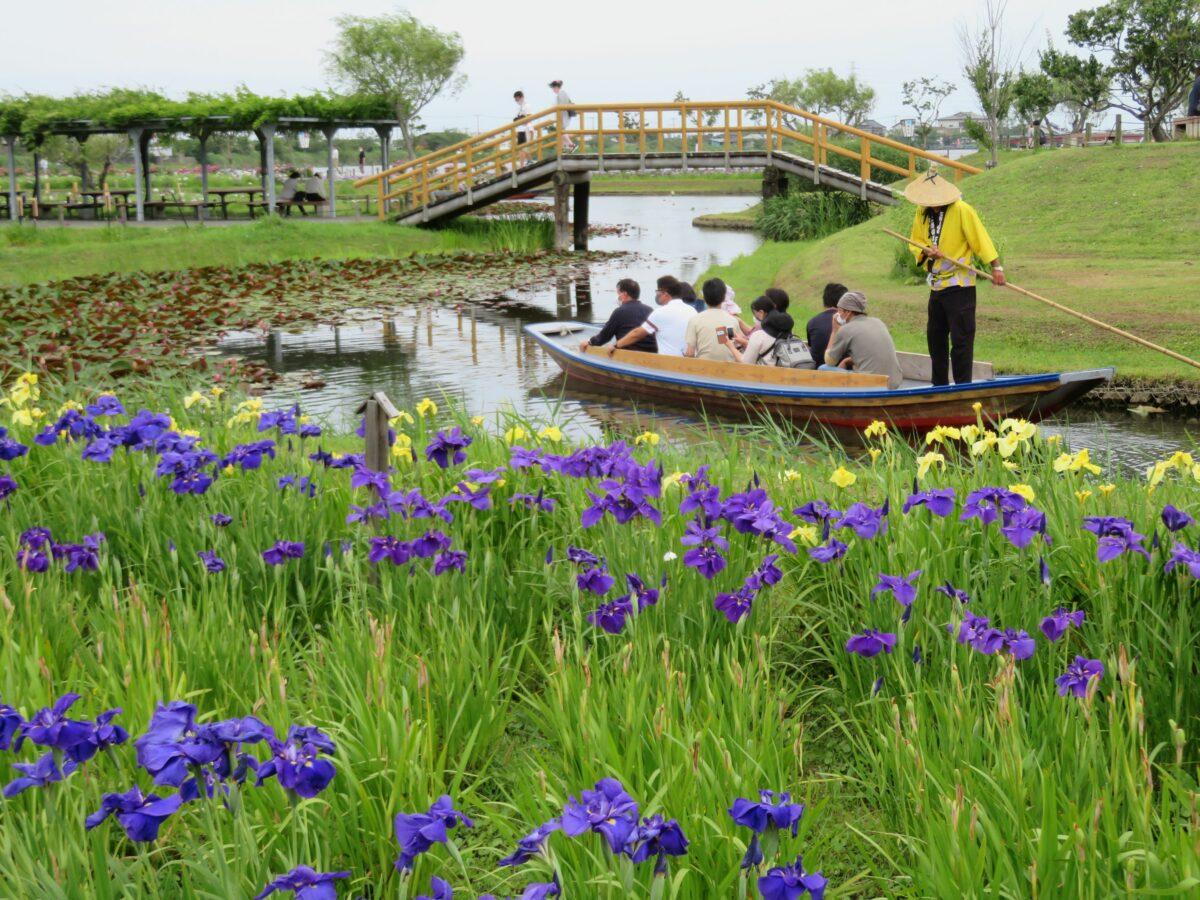 水郷佐原あやめ祭りが開催中!利根川沿いの約400種の花菖蒲は今が見頃!