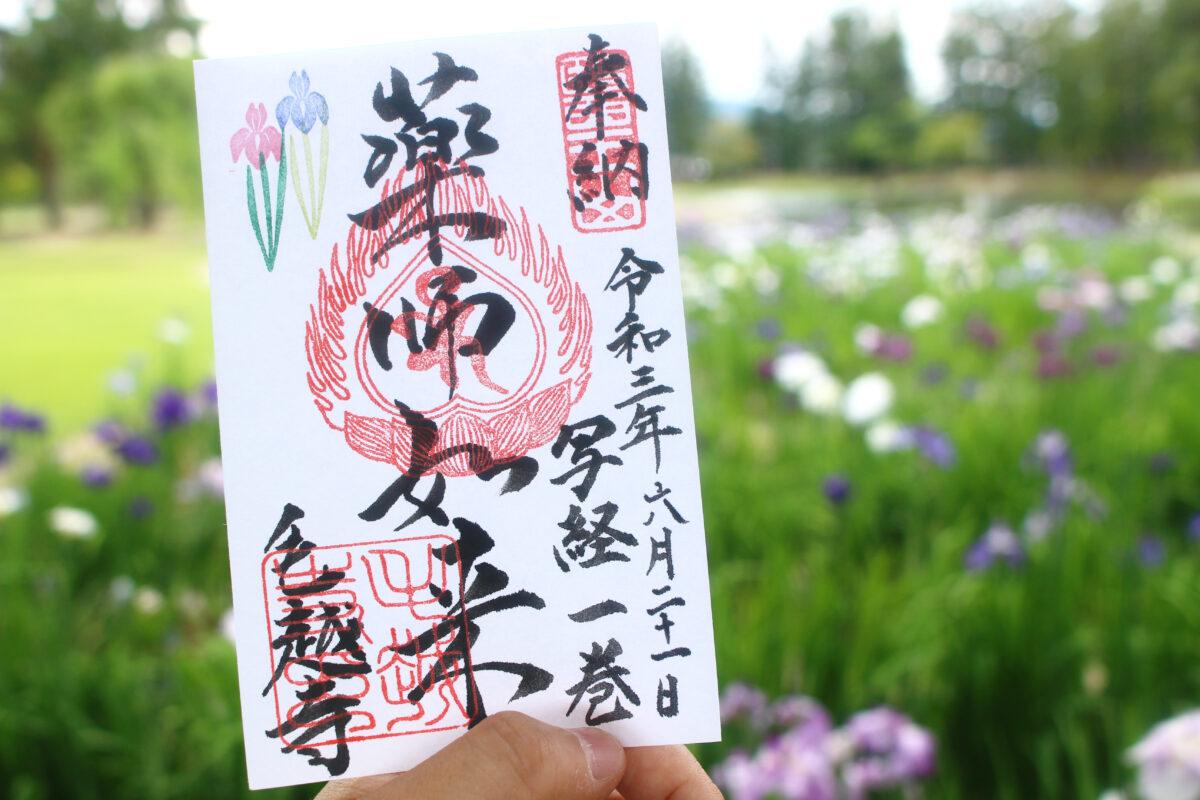 毛越寺あやめまつりで咲く、300種30000株の花菖蒲!写経体験、限定御朱印も必見