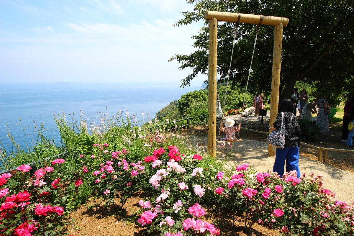 熱海ローズフェスティバル2021!600品種・4000株のバラがカラフルに咲くガーデン