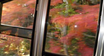 8月29日はケーブルカーの日!筑波山もみじまつり期間に車窓を流れる紅葉