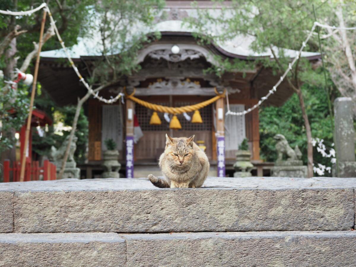 「猫返し神社」の別名を持つ阿豆佐味天神社とは?迷い猫が帰ってくる?