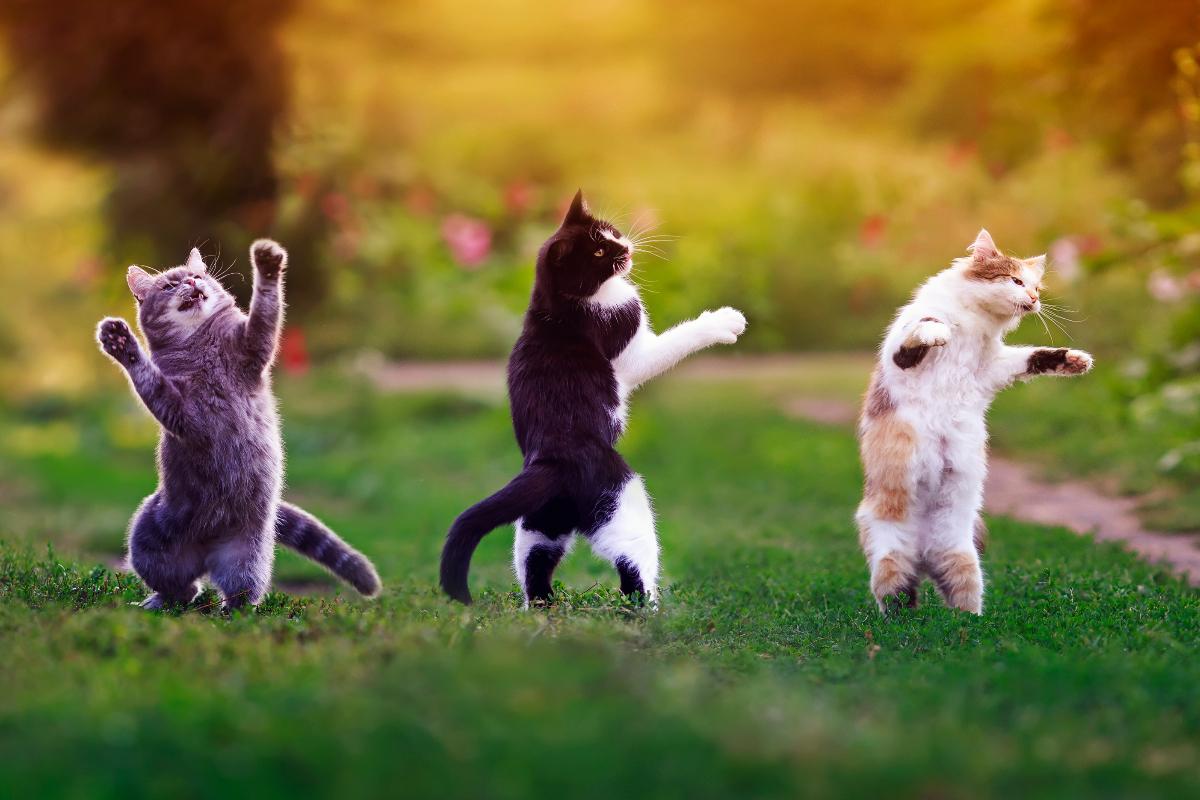 夏の夜の猫ハロウィン!?猫メイクで踊りまくる静岡の奇祭ってニャンだ?