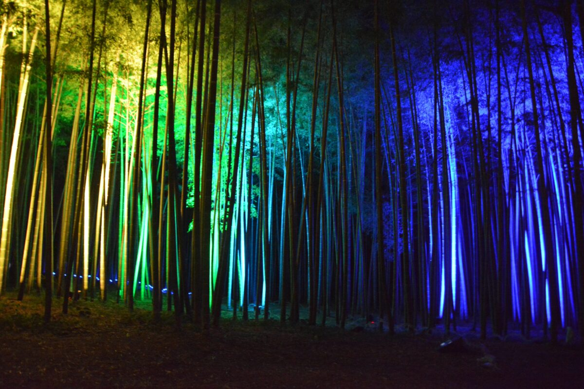 Bamboo Summer Nightsが開催中!幻想的に輝く孟宗竹
