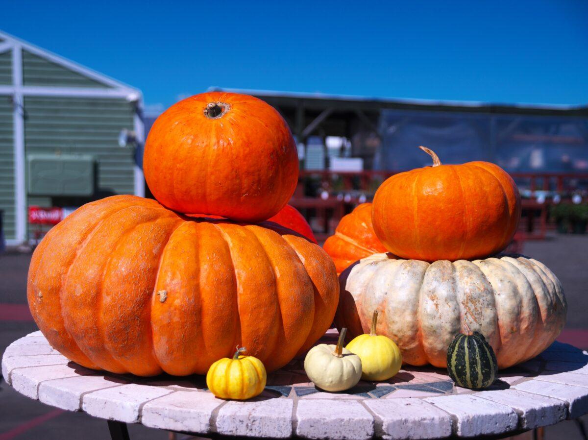 ハロウィンのシンボル「かぼちゃ」にちなんだ全国のお祭り4選!